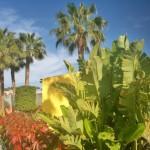 TropicalLaZona-GranCanariaGayStay-Gardens (1)