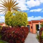 TropicalLaZona-GranCanariaGayStay-Gardens (2)