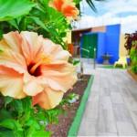 TropicalLaZona-GranCanariaGayStay-Gardens (3)