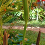 PasionTropical-GrancanariaGayStay-gardens