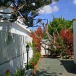 GayTenesoya-GranCanariaGayStay-gardens(11)