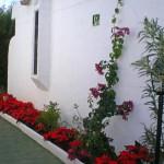 GayTenesoya-GranCanariaGayStay-gardens(6)