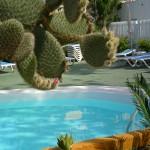 GayTenesoya-GranCanariaGayStay-pool(2)